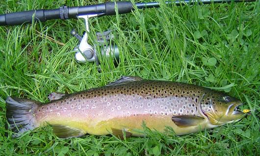 California fish species california fish website for Trout fishing california